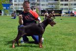 Marika Betelges - first in puppy class - SERBIAN NATIONAL SHOW 2015