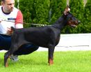 Dominicana Betelges - 4 and half months old - Dominicana Betelges -