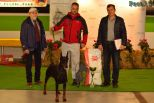 One more photo of my beautiful Esmir Betelges like Best of Breed on Hungarian Year Winner show. 