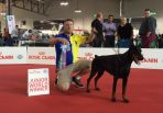 WORLD JUNIOR WINNER - ESMIR BETELGES - WORLD DOG SHOW ITALIA 2015